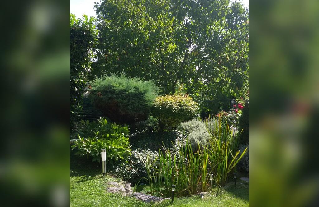 garden in the sun