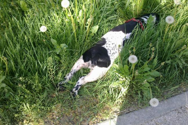 happy relaxed dog grass outdoors nature