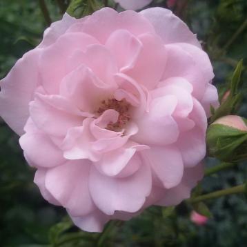 Beautiful flowers in my garden.