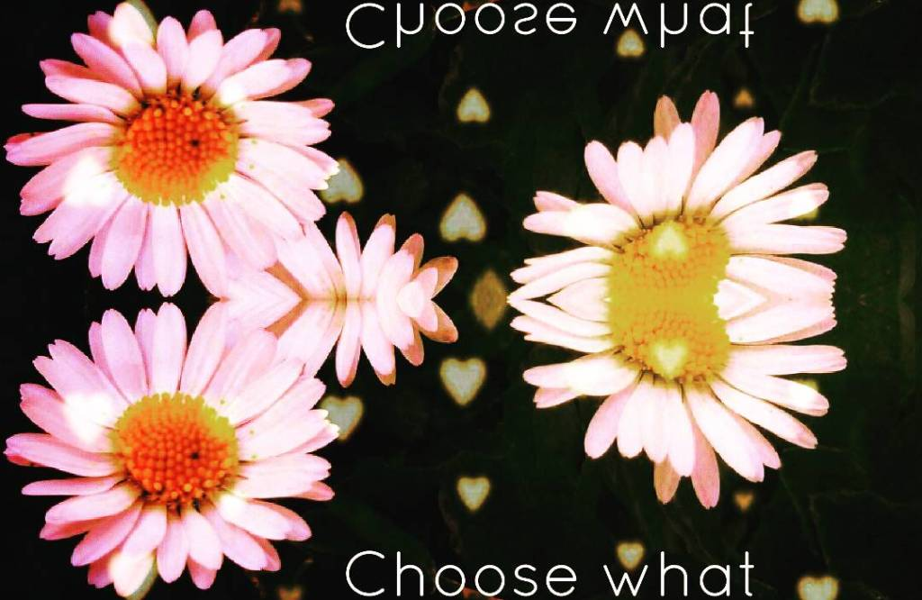 law of attraction my quote desire have fun choose