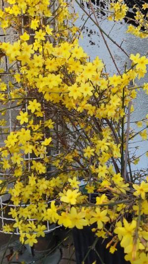yellow flowers spring bloom nature awakening