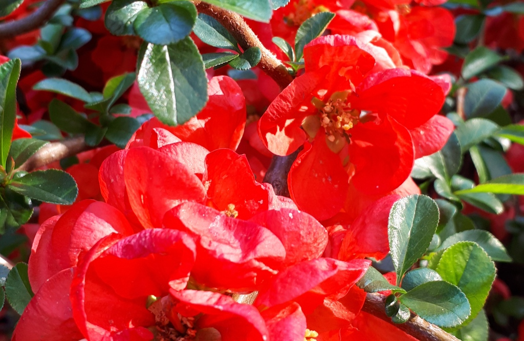 Red flowers beauty spring flower natural nature color