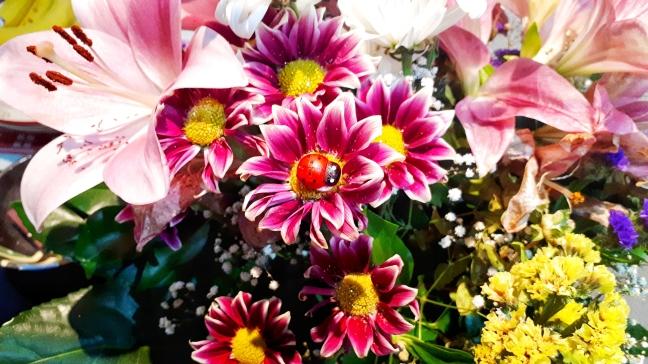 Flowers ladybug